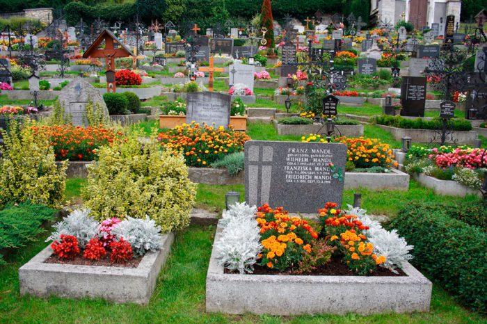 Які квіти посадити на кладовище, щоб вони цвіли, багаторічні квіти з фото і назвами