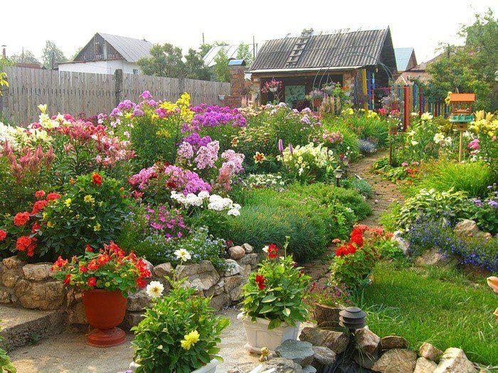 Багаторічні квіти для дачі, фото з назвами, каталог